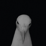 V.A. / MU EP (10 Label)